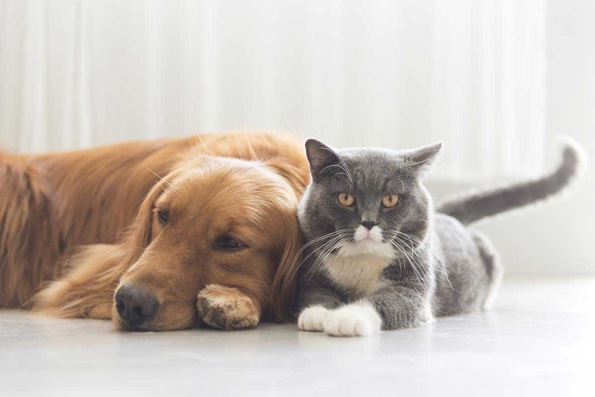 about our veterinary practice  Ventura, CA